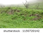 vegetation on rocks  a day with ... | Shutterstock . vector #1150720142