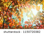 leaves on the branches in the... | Shutterstock . vector #1150720382