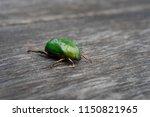 sternocera aequisignata...   Shutterstock . vector #1150821965