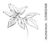 nifty gentle hand drawn...   Shutterstock .eps vector #1150832468