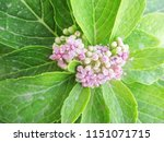beautiful colorful flowers   Shutterstock . vector #1151071715