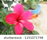 beautiful colorful flowers   Shutterstock . vector #1151071748