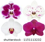 orchids isolated on white... | Shutterstock . vector #1151113232
