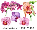 set of tropical orchid flowers... | Shutterstock . vector #1151139428