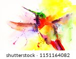 humming bird watercolor... | Shutterstock . vector #1151164082