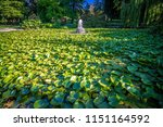 city of victoria british... | Shutterstock . vector #1151164592