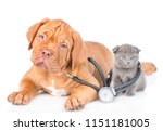 Stock photo tiny kitten and puppy with stethoscope on his neck isolated on white background 1151181005