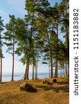 baltic sea shore in latvia. ... | Shutterstock . vector #1151183882