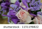 closed up of purple and pink... | Shutterstock . vector #1151198822