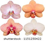 orchids isolated on white... | Shutterstock . vector #1151250422