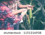 couple farmer and researcher... | Shutterstock . vector #1151316938
