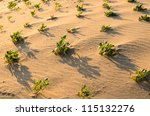 Green plant  on the sand leaves and sun - stock photo