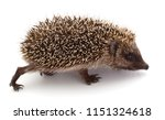 small hedgehog isolated on a... | Shutterstock . vector #1151324618