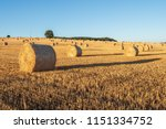 hay bales on the field after... | Shutterstock . vector #1151334752