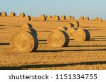 hay bales on the field after... | Shutterstock . vector #1151334755