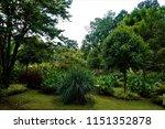 Garden in San Gerardo de Dota on rainy day