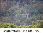 tropical forests are rich and... | Shutterstock . vector #1151358722