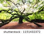 angel oak tree sunrise in south ... | Shutterstock . vector #1151432372