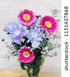 pink gerbera and chrysanthemums ... | Shutterstock . vector #1151437868