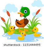 Mother Duck Swims With Her...
