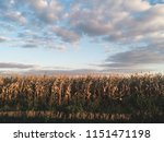 agriculture background. field... | Shutterstock . vector #1151471198
