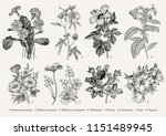 botany. set vintage medical... | Shutterstock .eps vector #1151489945