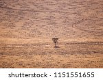 fairy circles on namib desert | Shutterstock . vector #1151551655
