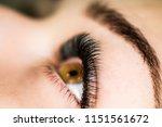 artificial eyelash extensions...   Shutterstock . vector #1151561672