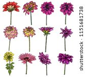 flowers set. botanical dahlias... | Shutterstock .eps vector #1151681738
