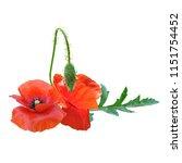 beautiful red poppy. bloom of...   Shutterstock .eps vector #1151754452