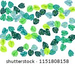philodendron or monstera plant. ... | Shutterstock .eps vector #1151808158