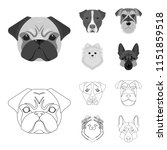 muzzle of different breeds of... | Shutterstock .eps vector #1151859518