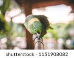 beautiful green parrot with... | Shutterstock . vector #1151908082