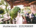 beautiful green parrot with... | Shutterstock . vector #1151908085