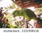 beautiful green parrot with... | Shutterstock . vector #1151908118