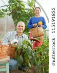 Man and woman in vegetable plant  at hothouse - stock photo