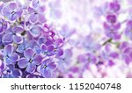 macro view blossoming syringa... | Shutterstock . vector #1152040748