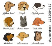afghan hound  airedale terrier  ... | Shutterstock .eps vector #1152084152