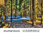 forest trees background.... | Shutterstock . vector #1152092012