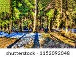 forest trees sunlight shadows...   Shutterstock . vector #1152092048