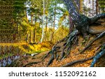 autumn forest tree roots... | Shutterstock . vector #1152092162