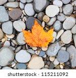 Autumn Leaf Background Sea...