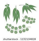 eucalyptus set. isolated... | Shutterstock .eps vector #1152134828