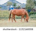 mother horse eating grass alone ... | Shutterstock . vector #1152168308