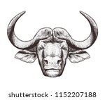 buffalo head isolated on white... | Shutterstock .eps vector #1152207188