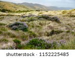 meadow with clumps of... | Shutterstock . vector #1152225485