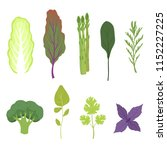 fresh salad greens and leaves... | Shutterstock .eps vector #1152227225