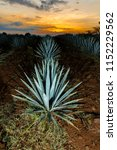 sunset landscape of a tequila... | Shutterstock . vector #1152229562