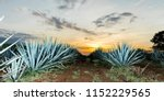 sunset landscape of a tequila... | Shutterstock . vector #1152229565