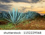 sunset landscape of a tequila... | Shutterstock . vector #1152229568